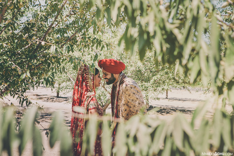 Sikh wedding photoshoot in orchard with bride and groom