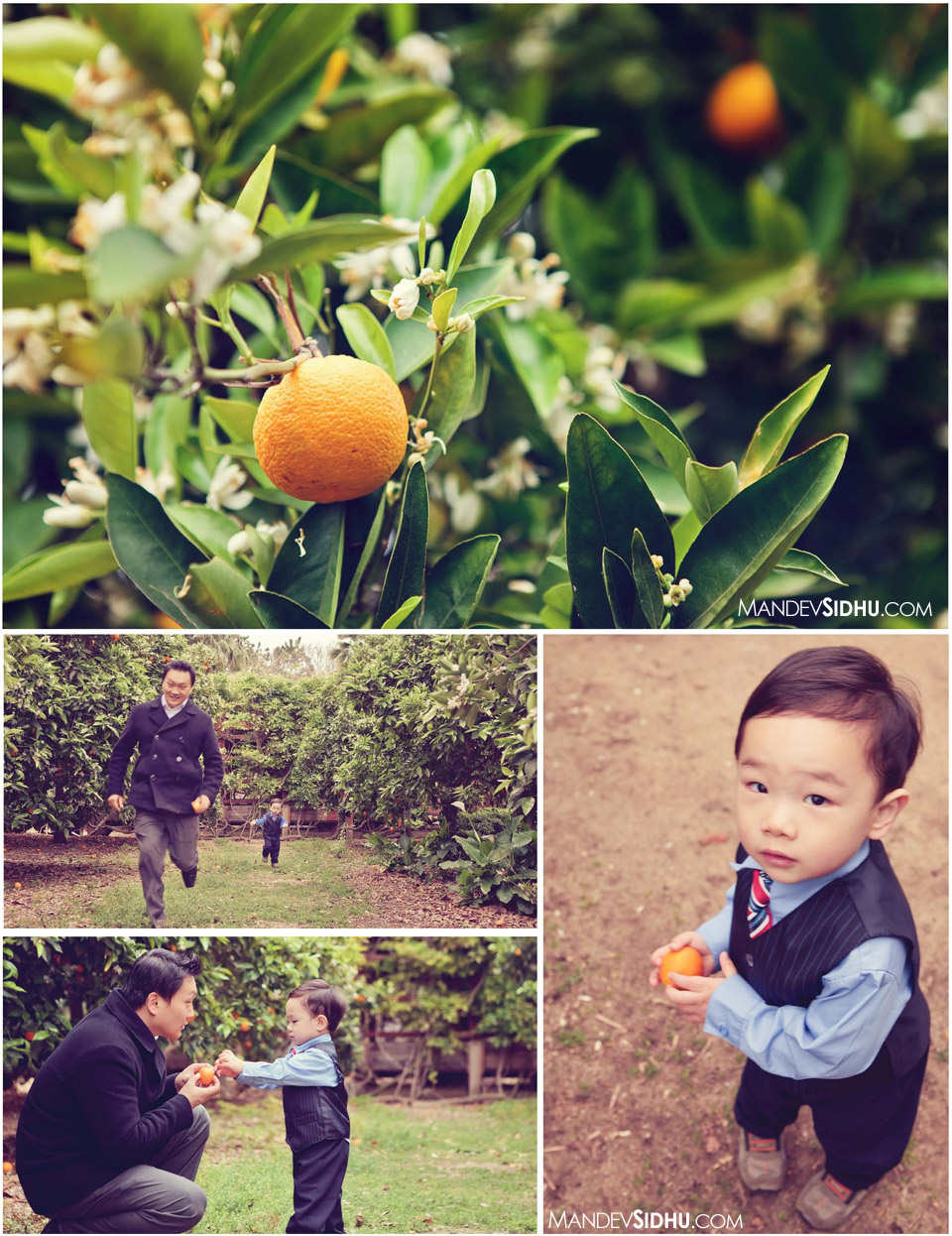family fun in the orange orchard