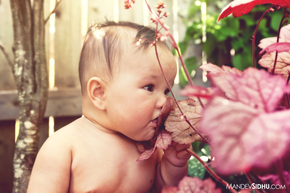cute newborn baby girl smelling flowers
