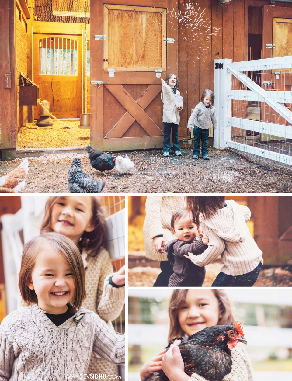 country family photographer