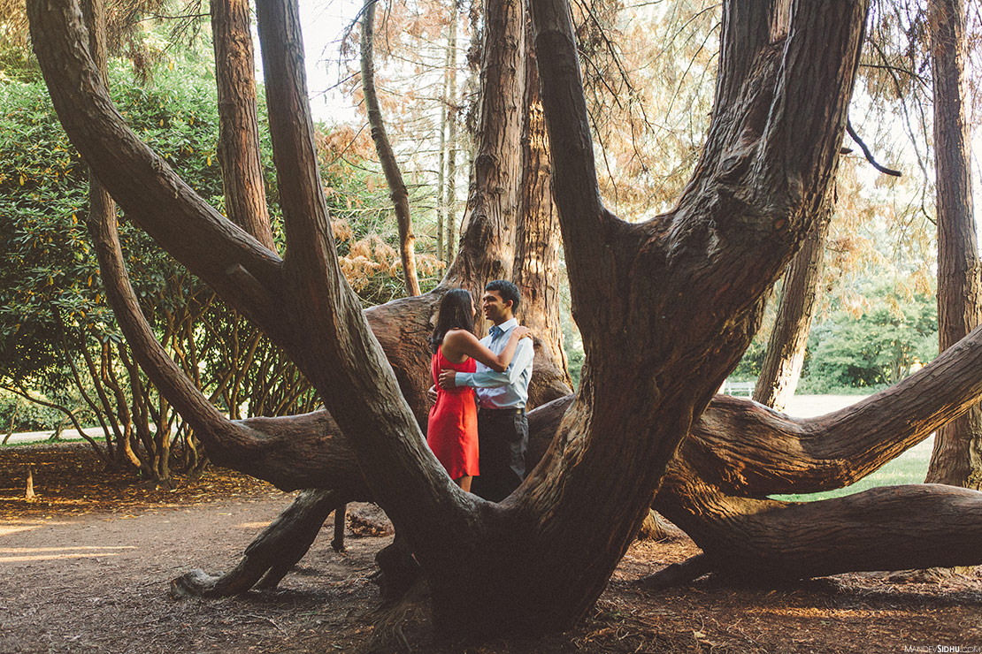 couple hugs each other in large beautiful tree at volunteer park on Capitol Hill